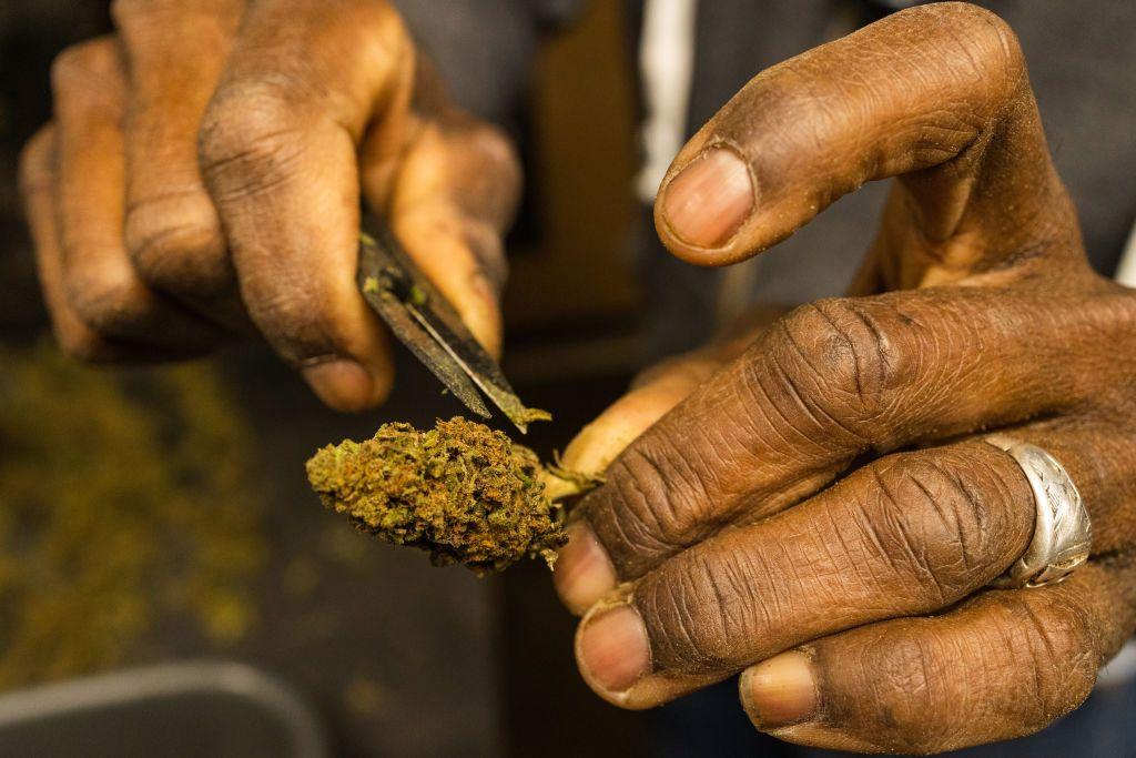 Une ferme de chanvre à New York se rapproche de la légalisation de la marijuana récréative